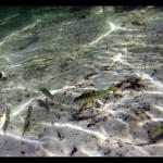Grubensee - unter Wasser