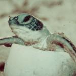 Eine Schildkröte namens Bela