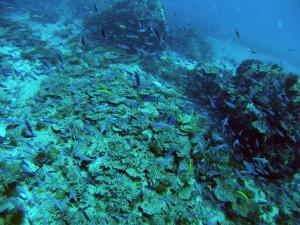 Trompeuse Rocks, Seychellen